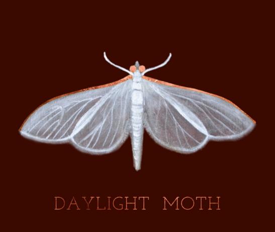 Daylight Moth